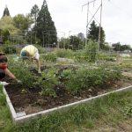 Ευρωπαϊκή πιστοποίηση διαχειριστών αστικών ή περιαστικών κήπων και λαχανόκηπων